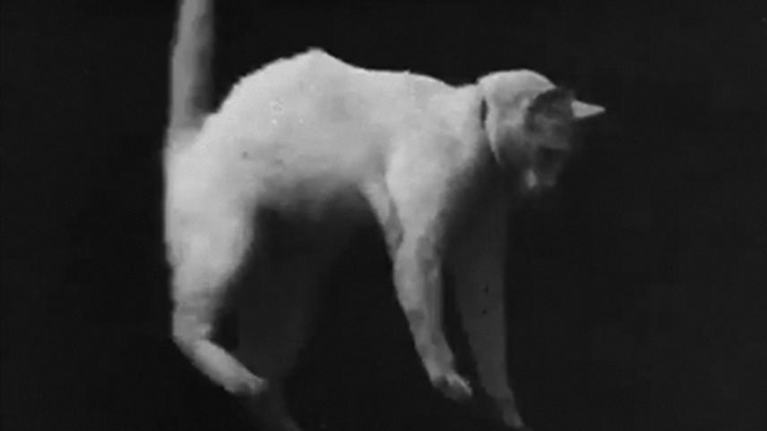 The boxing cats prof weltons 1894 - trakttv