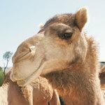 Camelo Pacato profile picture