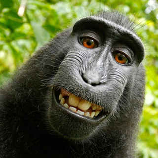 Monkey Flix profile picture