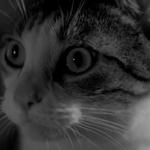 Krysiaax profile picture