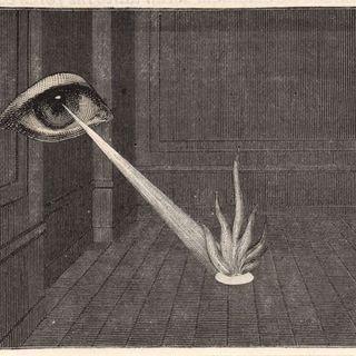 Traum Baum profile picture