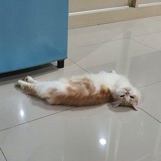 Dewi Martiwi profile picture
