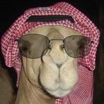 Haji Abdul Karim profile picture