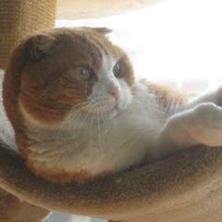 Ismael Marrero profile picture