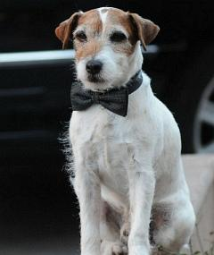 Photo of Uggie