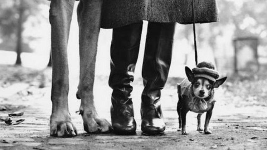 Elliott Erwitt: I Bark at Dogs