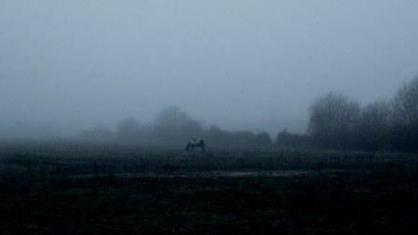The Ethereal Melancholy of Seeing Horses in the Cold