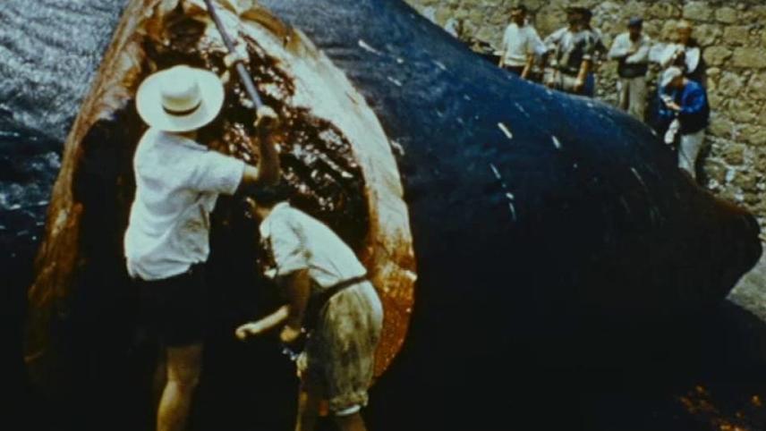 Les hommes de la baleine