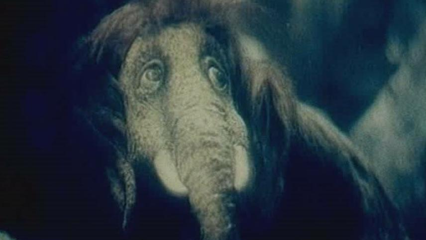 About The Little Mammoth