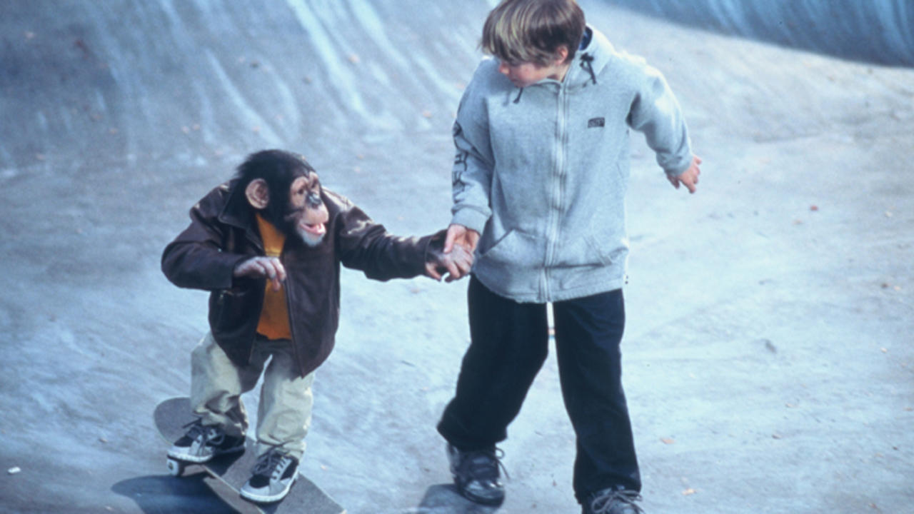 MVP: Most Vertical Primate (2001) Trailer on MUBI