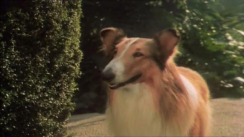 The Magic of Lassie