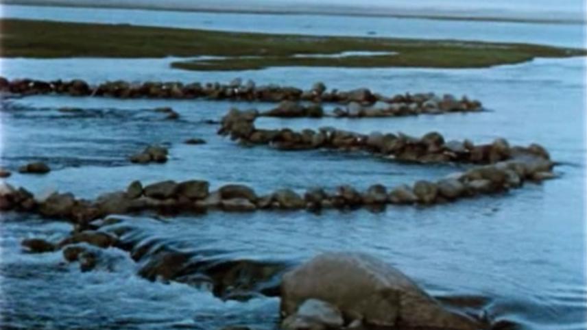 Netsilik Eskimos, VII: Fishing at the Stone Weir