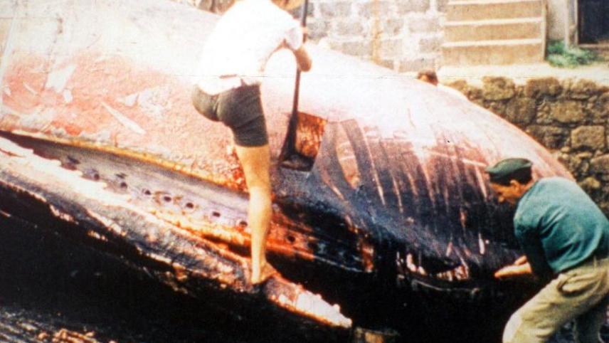 Mario Ruspoli, prince des baleines et autres raretés