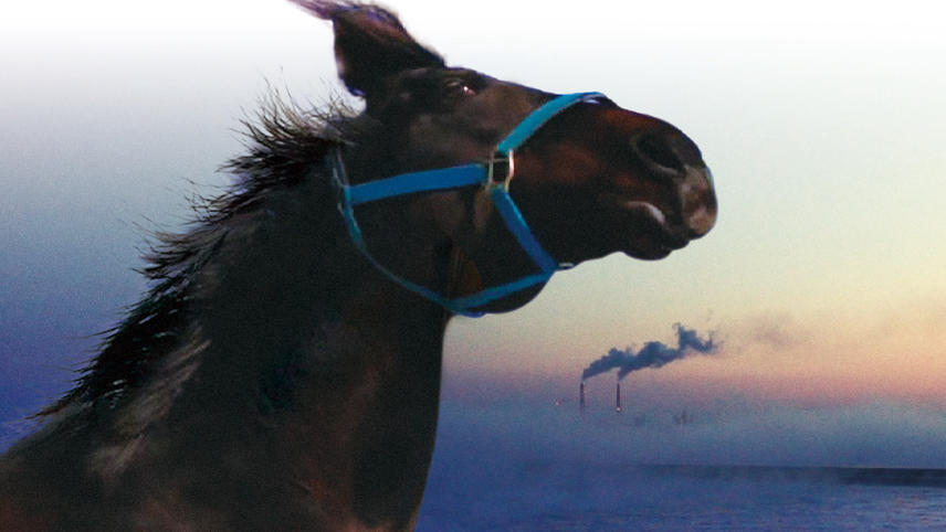 The Horses of Fukushima