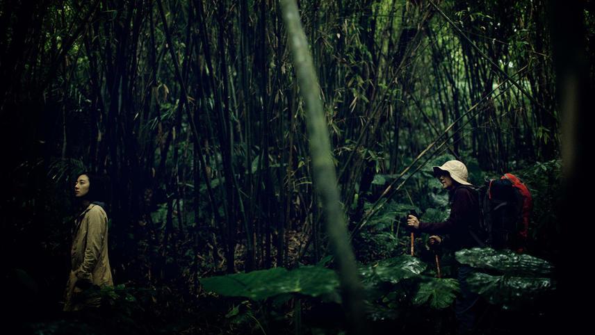 Forêt Debussy