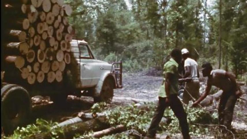 Woodcutters of the Deep South
