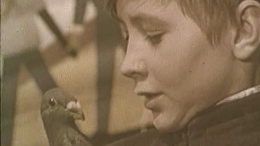 The Boy and the Pigeon