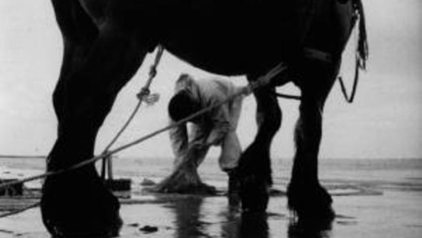 Pêcheurs à cheval