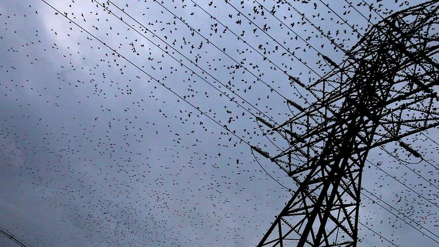 Starlings (at Nightfall)