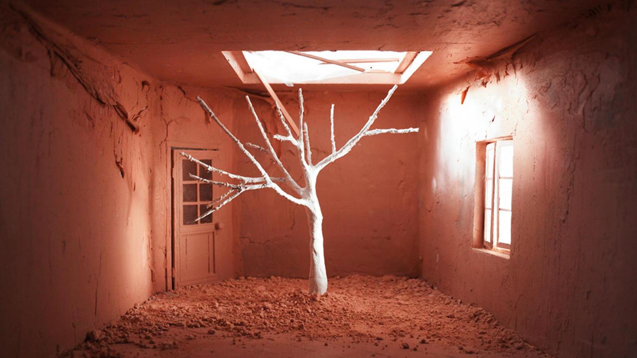 Image result for Limoeiro / Lemon Tree by Joana Silva