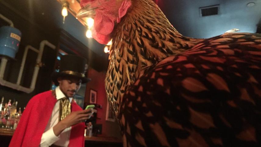 Chicken Tuesdays