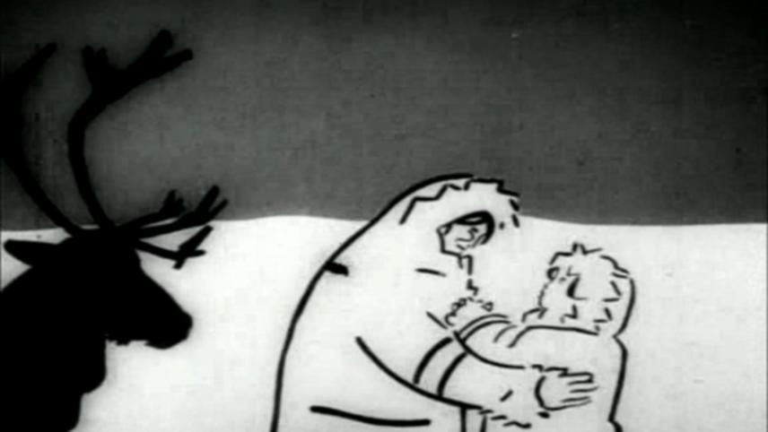 Samoyed Boy