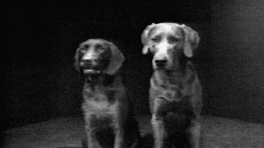 Dog Duet