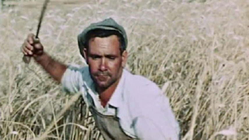 La passione del grano
