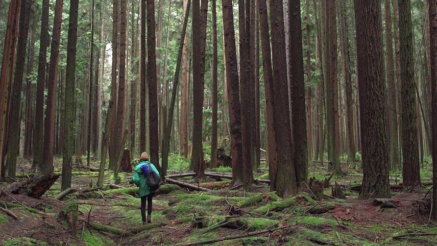 Forest Movie