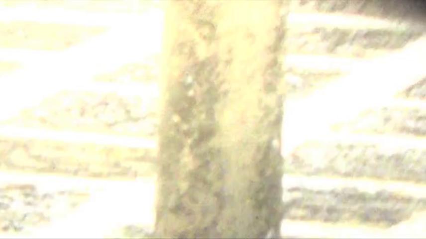 F (short film)