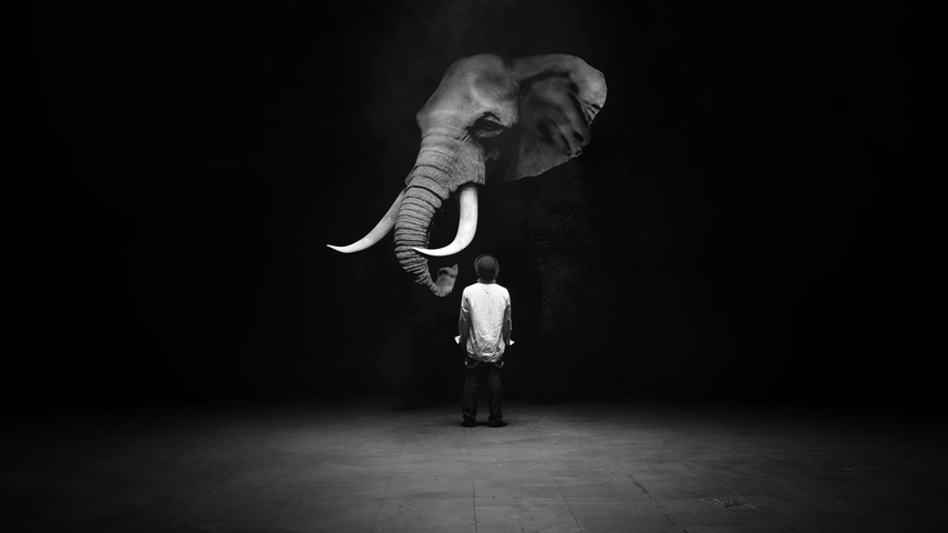 The Dog and the Elephant