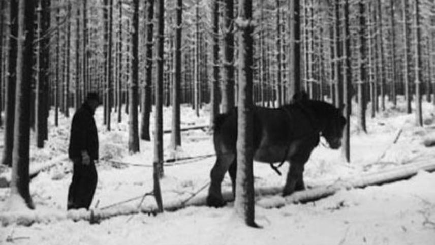 La neige, le feu, et un cheval Ardennais
