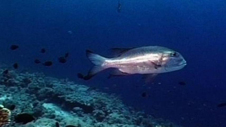 Careless Reef Part 2: Abu Kiffan