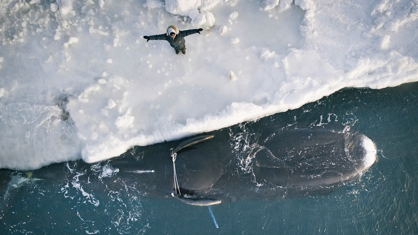 Anaiyyuun: Prayer for the Whale