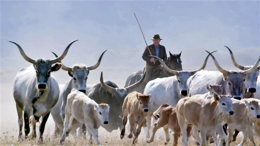 The Last Italian Cowboys