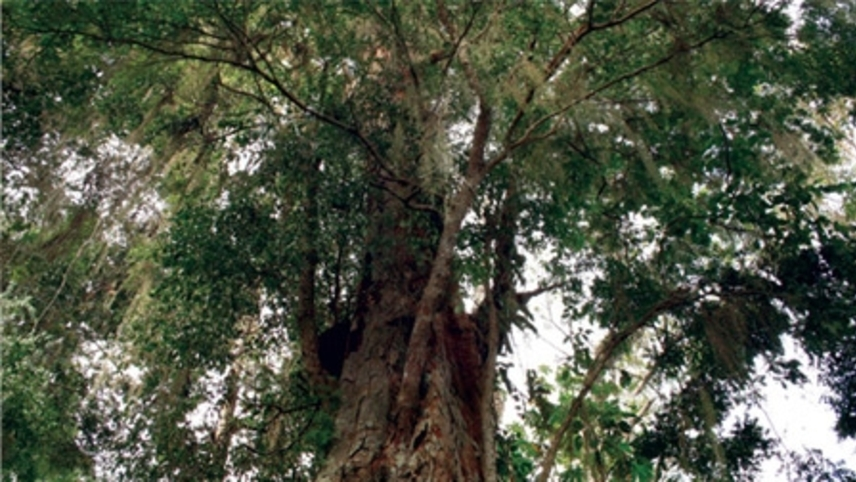 The Music Tree