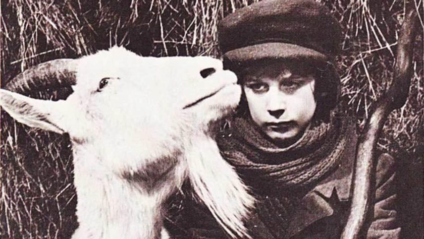 Zlateh the Goat