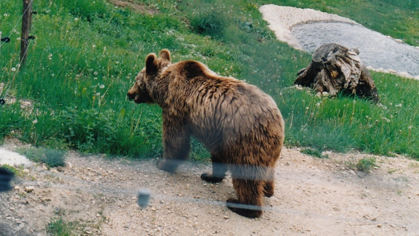 Dancing Bear Park