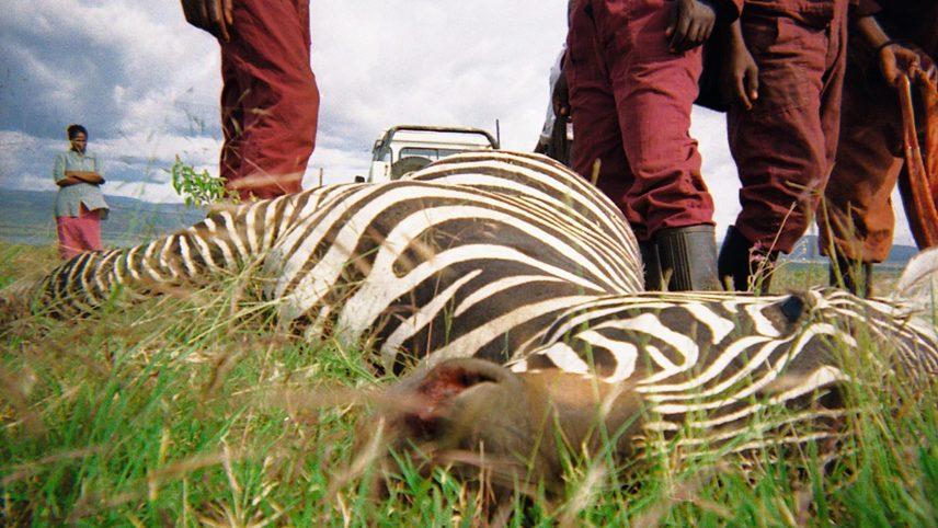 Zebra Project