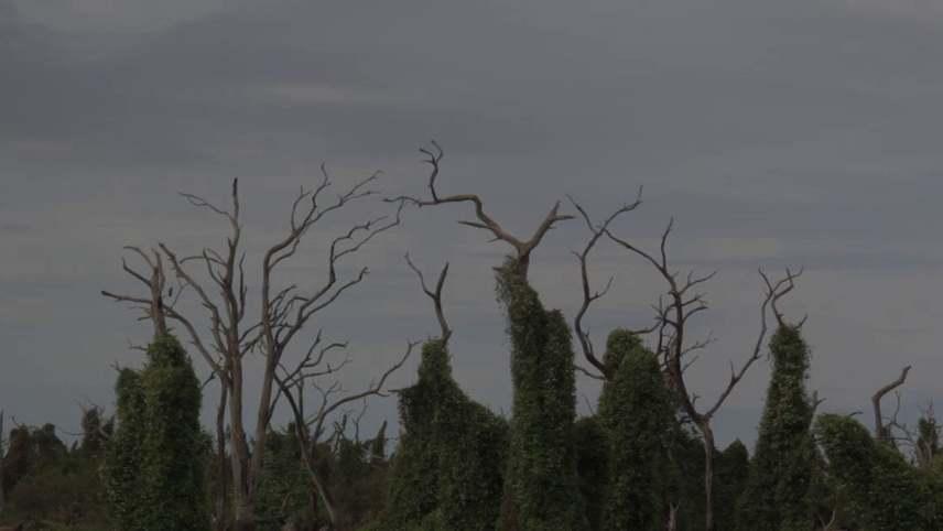El árbol negro