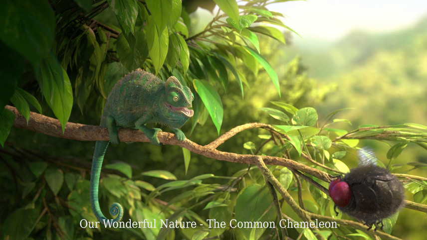 Our Wonderful Nature - The Common Chameleon