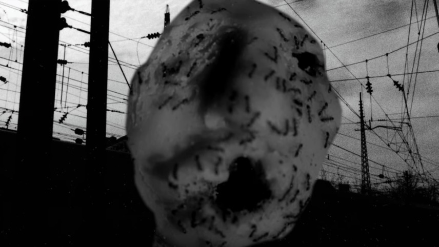Ant Head