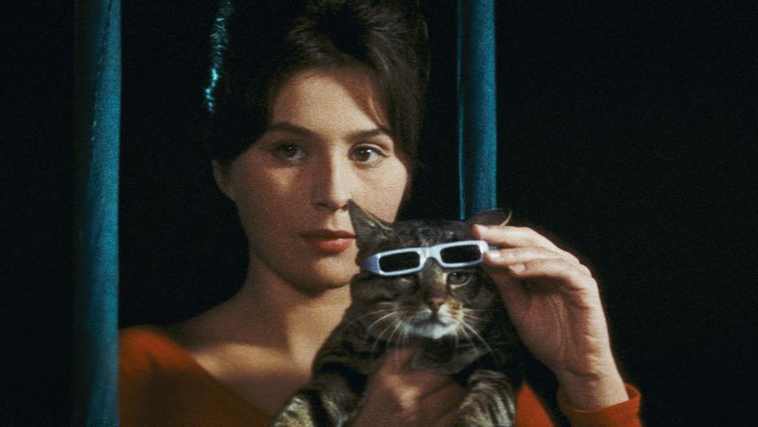 The Cassandra Cat
