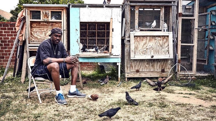 Pigeon Kings