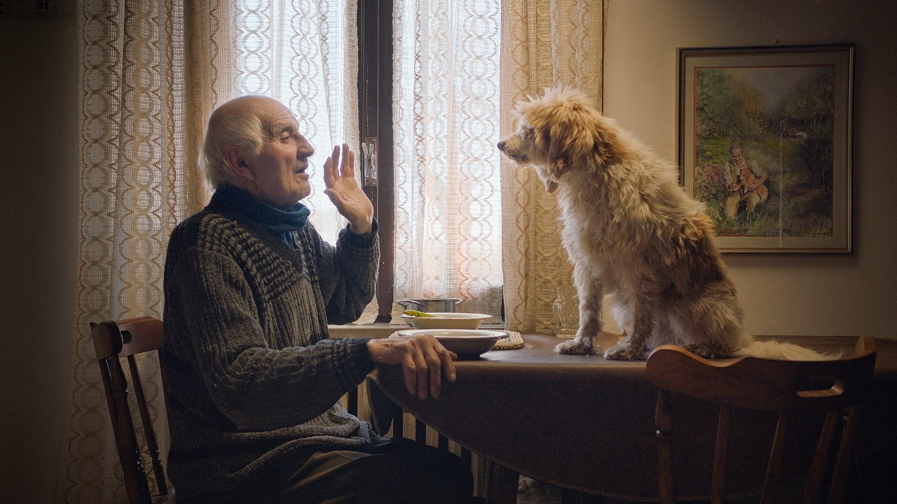 Image result for In the secret forests of Northern Italy, a dwindling group of joyful old men and their faithful dogs search for the world's most expensive ingredient, the white Alba truffle. Their stories form a real-life fairy tale that celebrates human passion in a fragile land that seems forgotten in time.