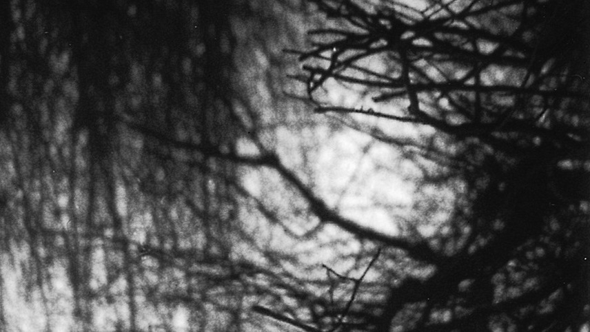 3/60: Trees in Autumn