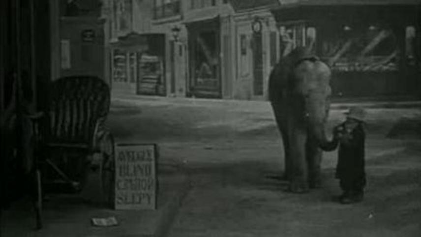 Tiny Tim and the Adventures of His Elephant