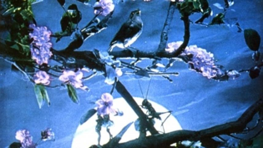 Voice of the Nightingale