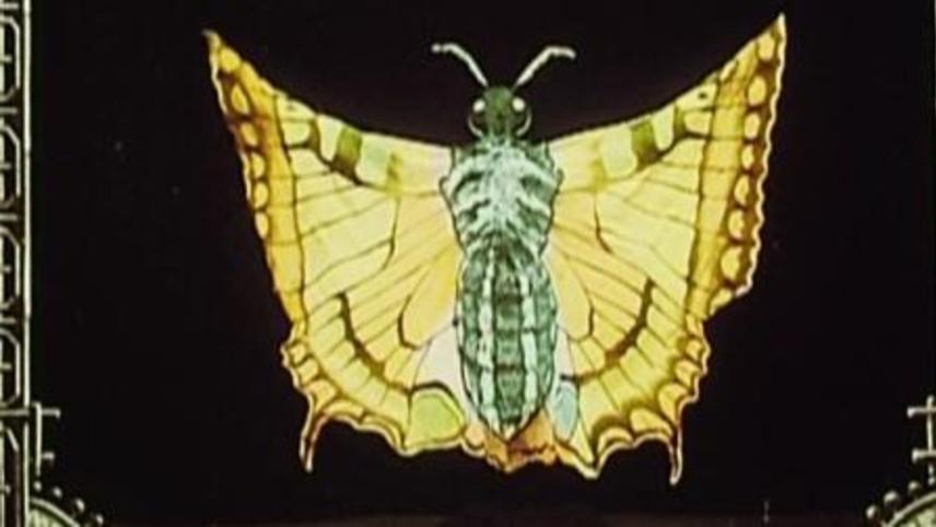 The Japanese Butterflies