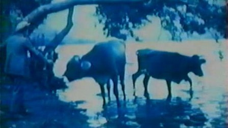 Diana 39 s looking glass 1996 mubi - Lo specchio di diana nemi ...
